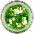 Green nail art hexagon - aqua elements