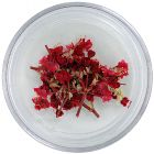 Dried flowers – red