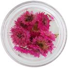 Pink dried flowers