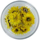 Dried flowers – yellow