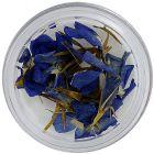 Blue-purple dried flowers